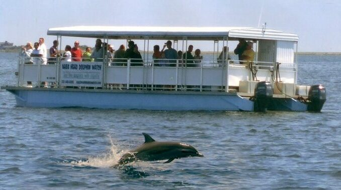 Nags Head Dolphin Watch Dolphin eco-tour
