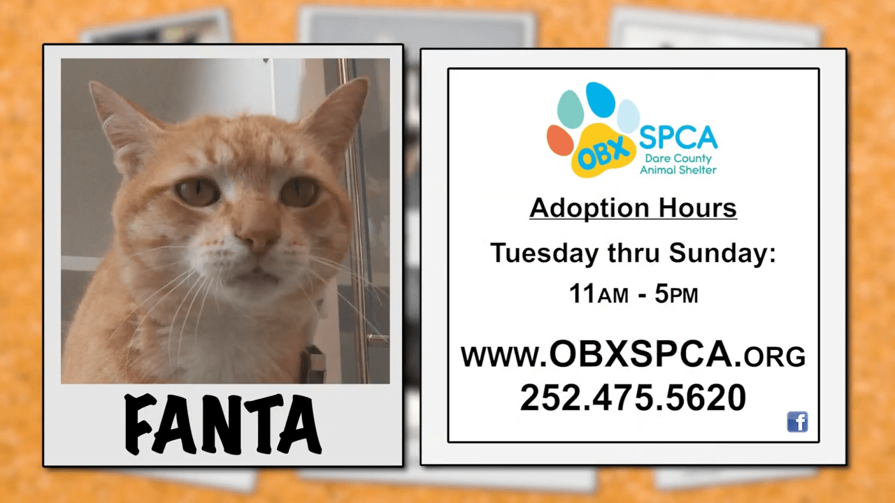 Outer Banks SPCA Pet of the Week: Fanta - OBXToday.com